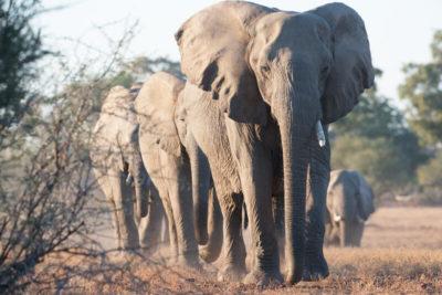 Okavango hidden gems wildlife 2
