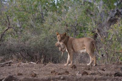Okavango hidden gems wildlife 3