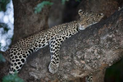 Okavango hidden gems wildlife 4