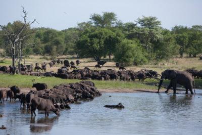 Okavango hidden gems wildlife 5