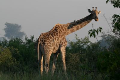Okavango Hidden Gems - Botswana - Giraffe & Bird