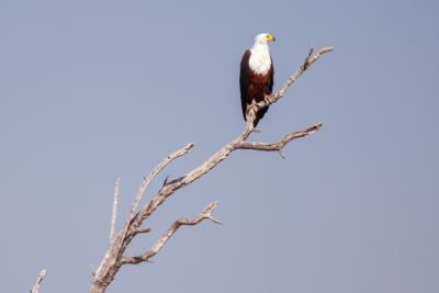 Okavango Hidden Gems - Okavango Delta - Botswana - Birdlife