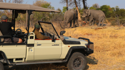 Okavango Hidden Gems - Okavango Delta - Botswana - Luxury Tented Safari Camp - Game Drive - Big Five - Elephants