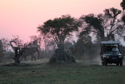 Okavango Hidden Gems - Okavango Delta - Botswana - Sunset Game Drive with Elephant