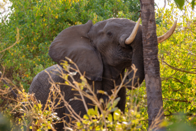 Okavango Hidden Gems - Okavango Delta - Botswana - Wildlife - Big Five - Elephant